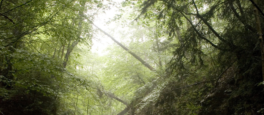 treebridge cropped
