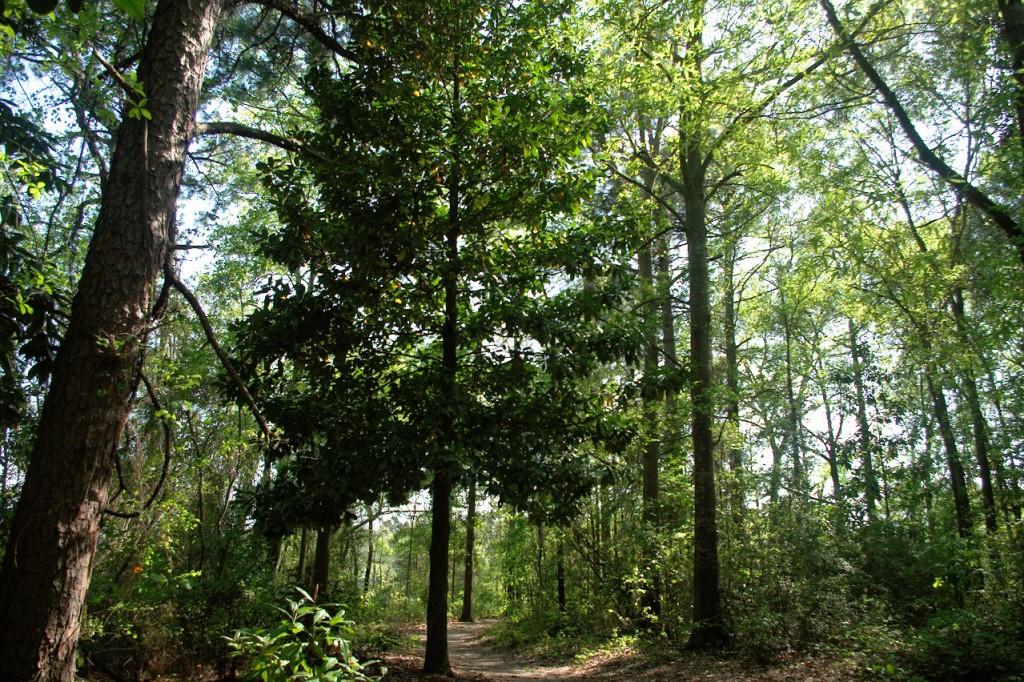 North Carolina trees